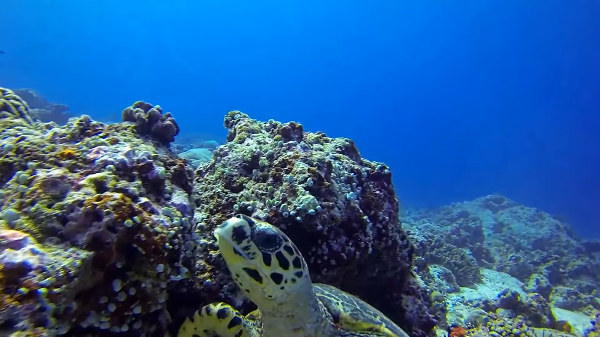 diver with moray eel