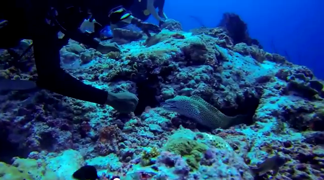moray eel maldives