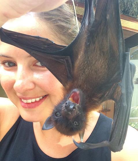 fruit bat maldives