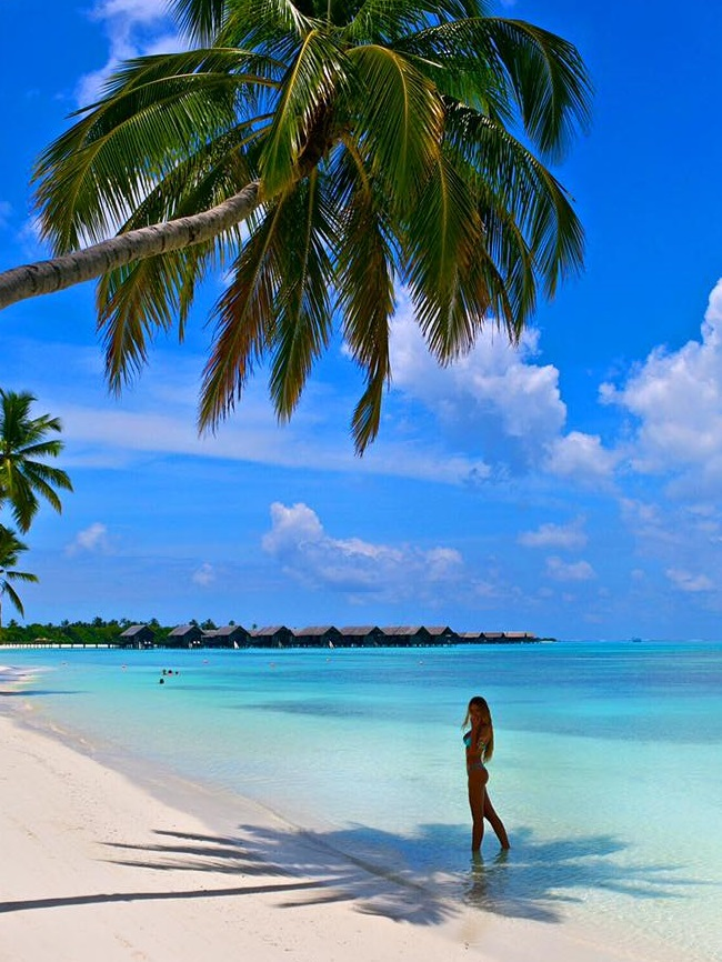 renee somerfield maldives