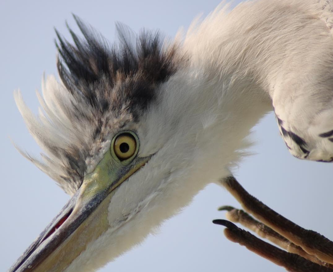 heron-at-kuramathi