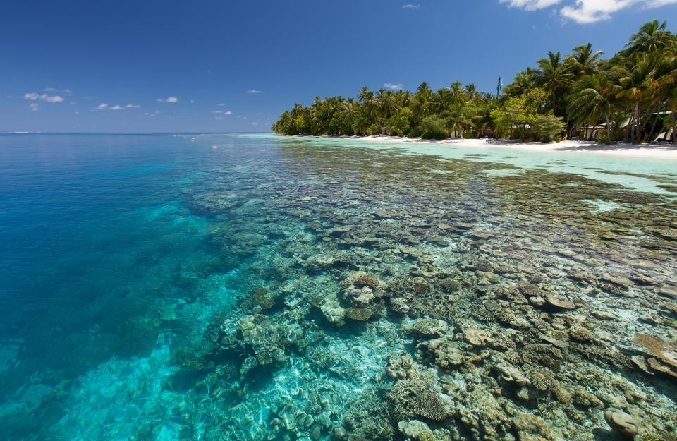 Vilamendhoo For Amazing Diving With All Inclusive