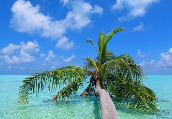 fallen palm tree