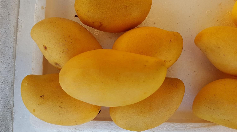 maldivian mango