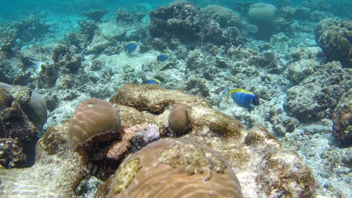 sj7 star underwater