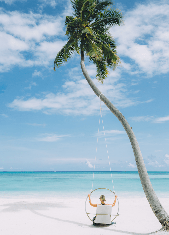 kandima palm tree