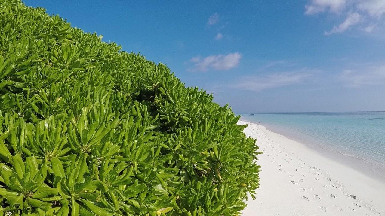 thoddoo vegetation
