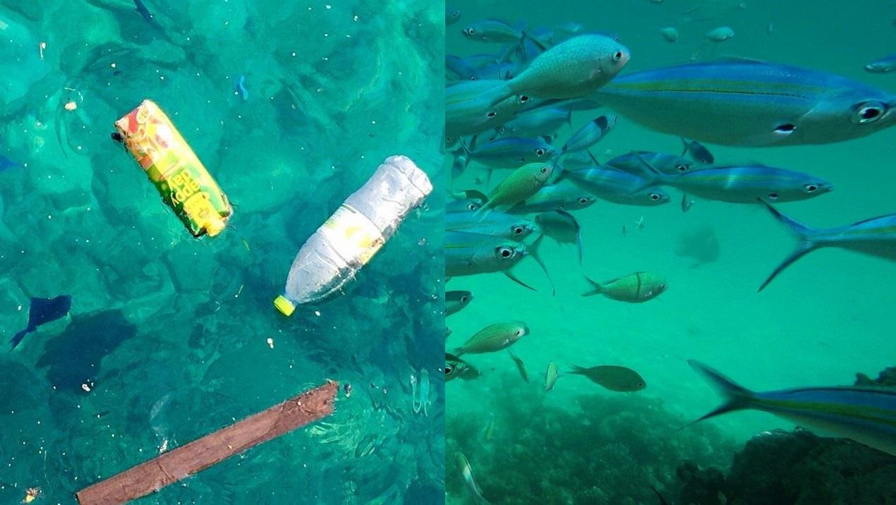 plastic in sea