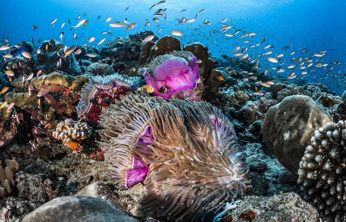 shangrila marine life