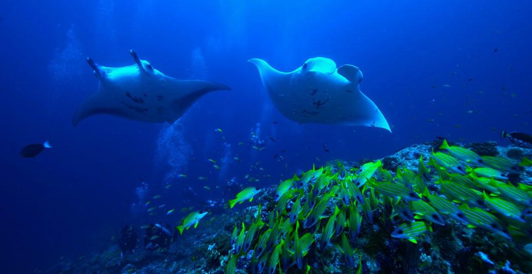 diving at raffles maldives