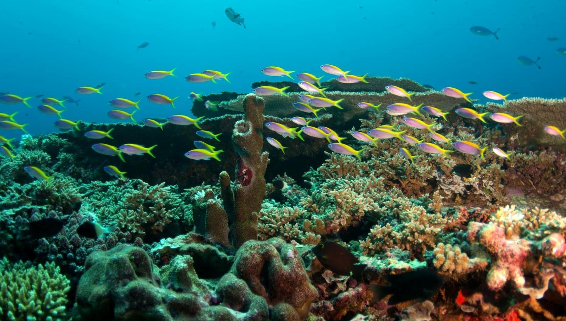 snorkeling at amari